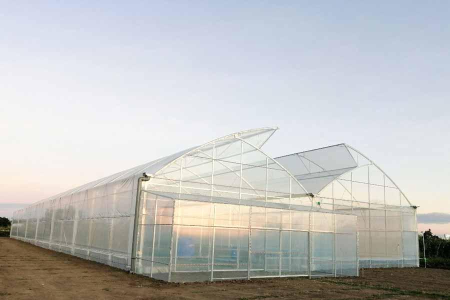 Nhà kính trồng rau khung thép