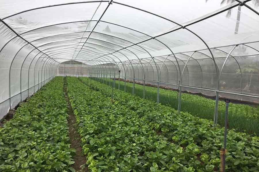Nhà lưới trồng rau khung thép
