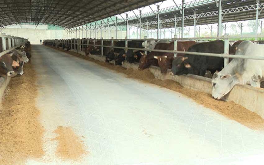 Trại chăn nuôi khung thép